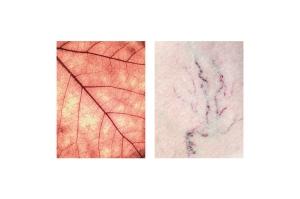 fragments-mireia-alises